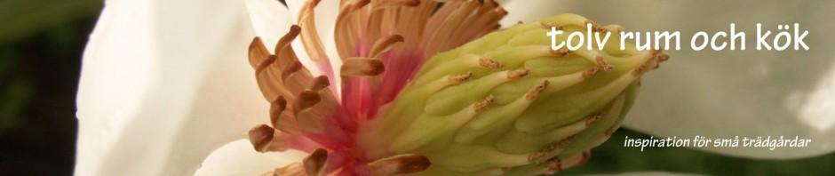 magnolia-banner