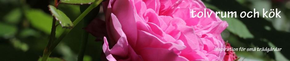 banner-rosor