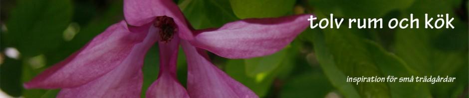 banner-magnolia
