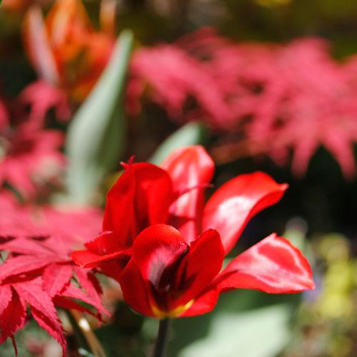 1305-red-spring-green-8